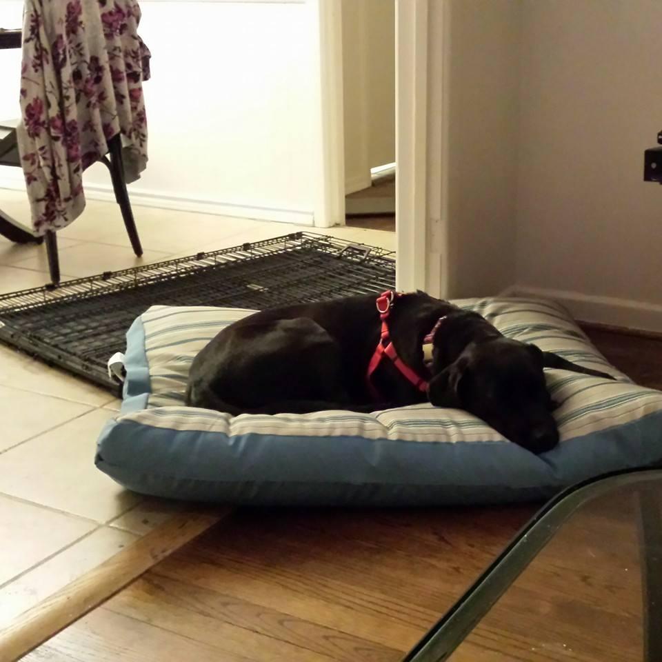 Layla Adoption