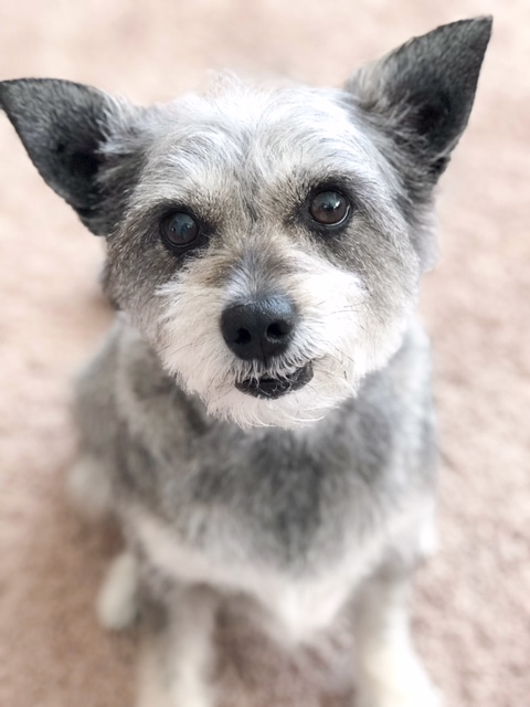 Bella Darling AKA Possum Simpson