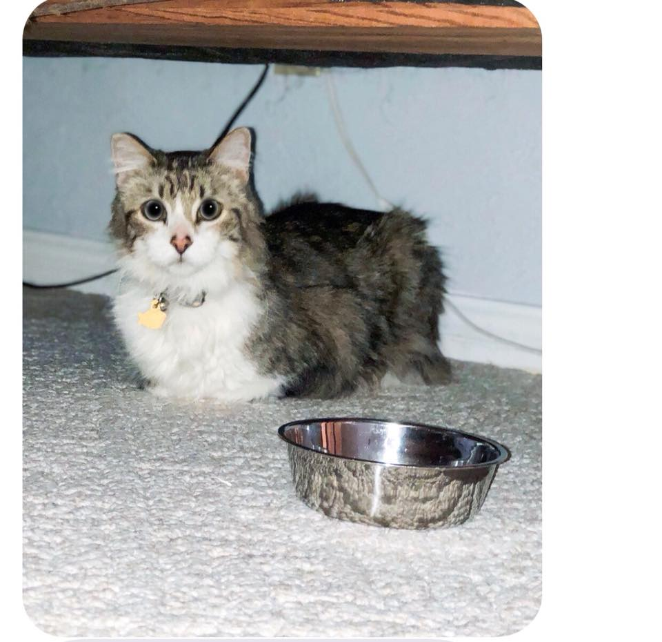 Maximus Adoption