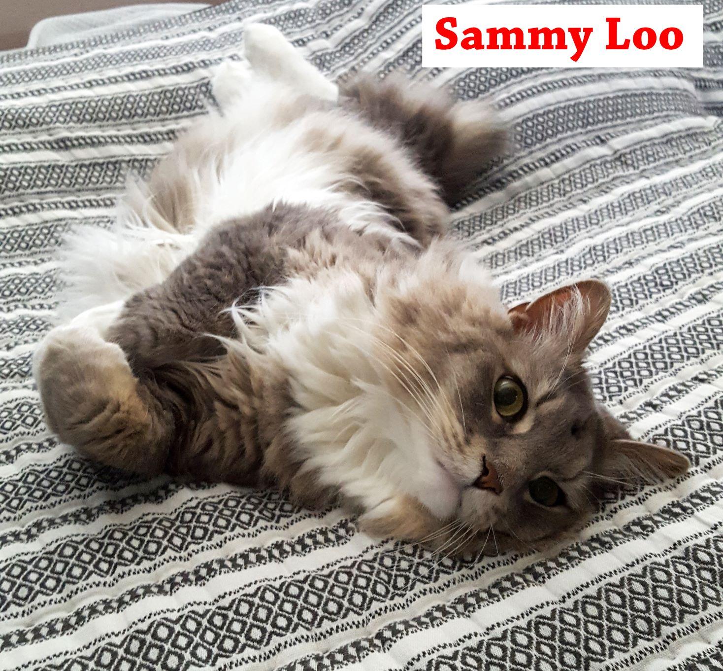 Sammy Loo Adoption