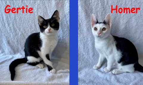 Gertie & Homer Double Adoption
